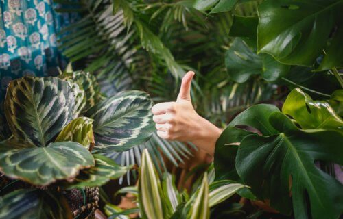 Thumbs up in garden, depicting self acceptance